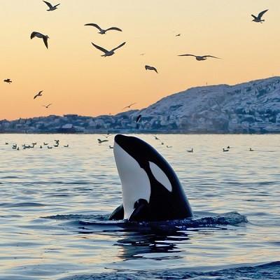 Pledge to avoid dolphinaria