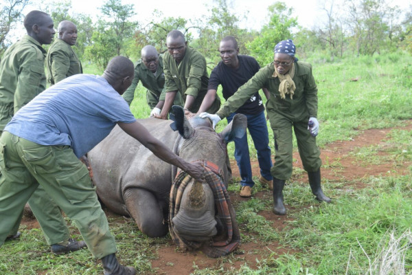 NEWS - BORN FREE KENYA HELPS RHINO IDENTIFICATION IN MERU