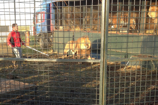 NEWS - BORN FREE REACTS TO LICENSE REFUSAL FOR LION CIRCUS