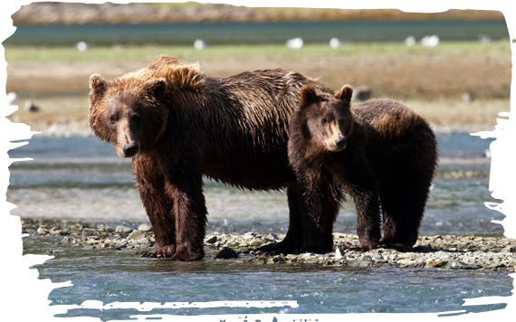ADOPTING A BROWN BEAR