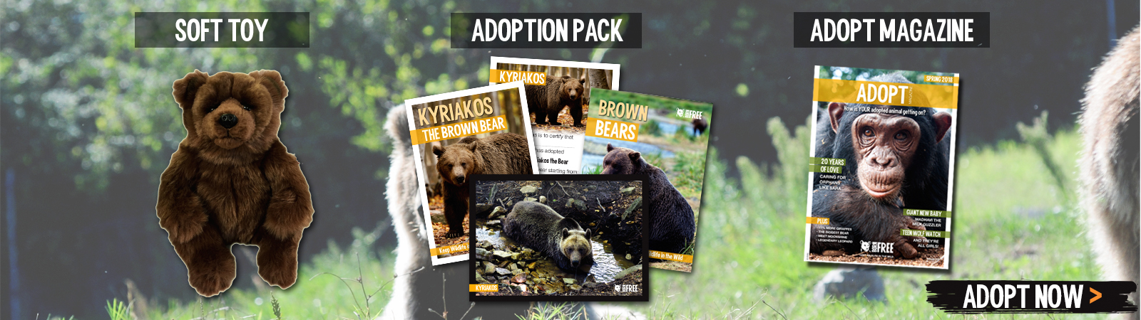 Sponsor a Brown Bear