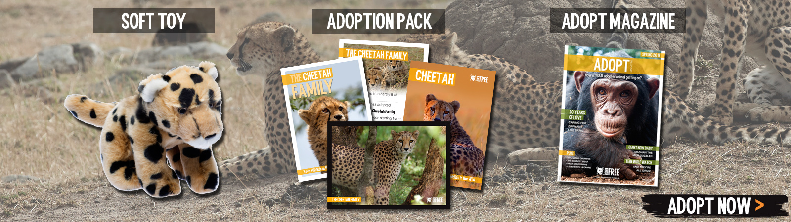 Sponsor a Cheetah