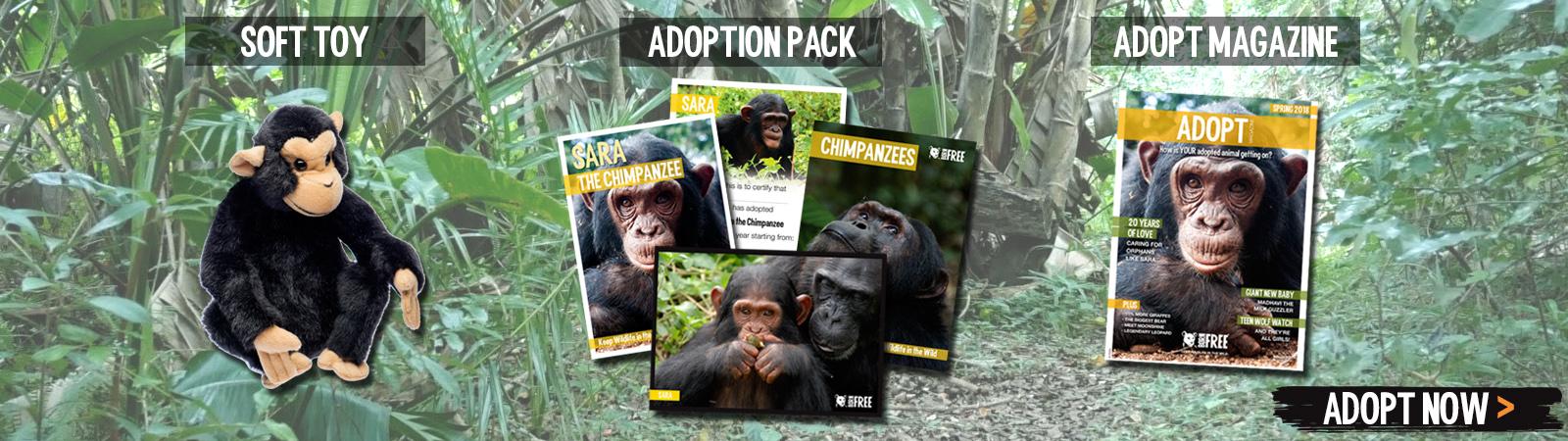 Sponsor a Chimpanzee