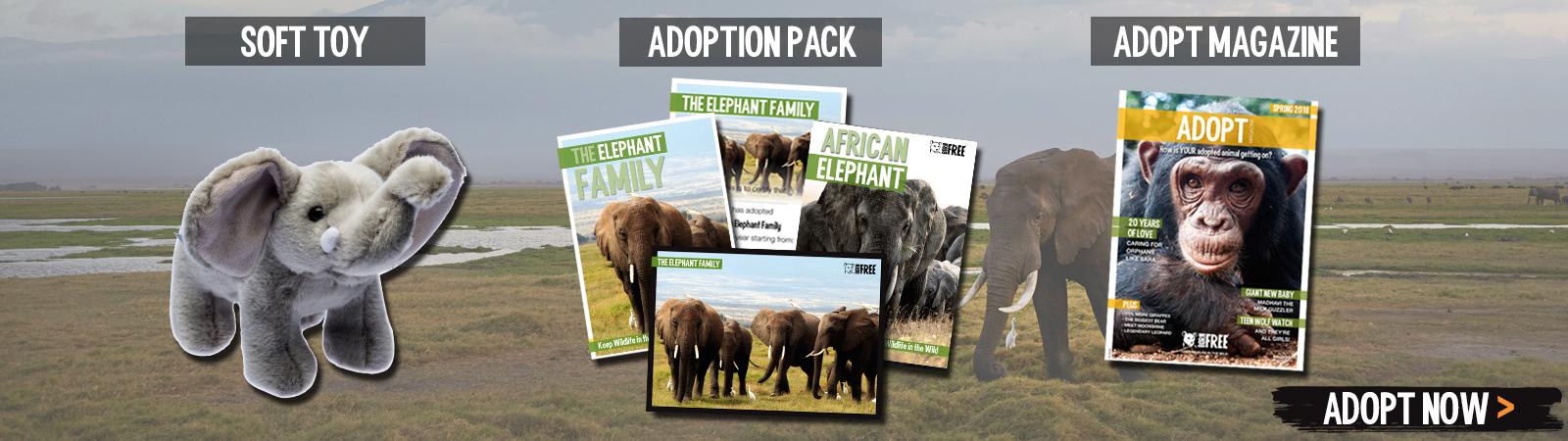 Sponsor a Elephant