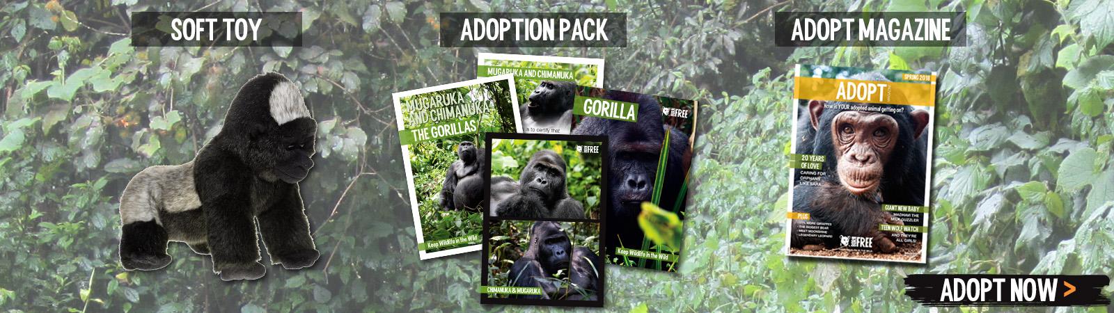 Sponsor a Gorilla