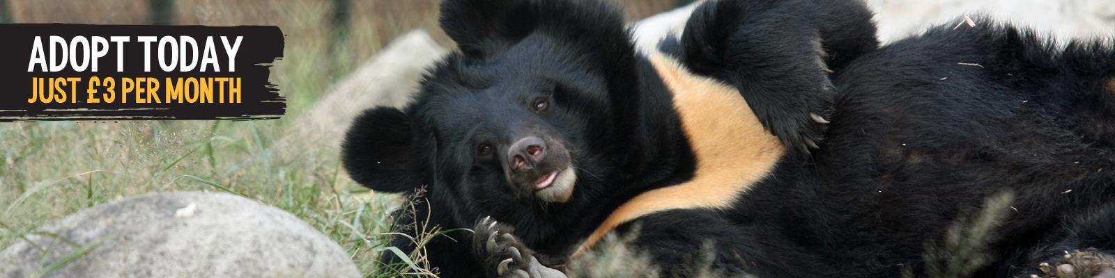 ADOPT AN MOON BEAR