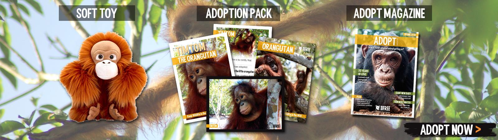 Sponsor a Orangutan