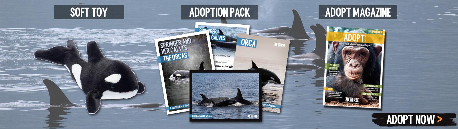 Sponsor a Orca