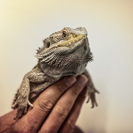 612dd613195395 The Exotic Pet Trade